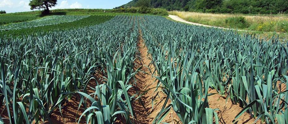 Fare del territorio agricolo trentino un distretto biologico? Verso un referendum propositivo
